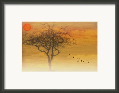 Back To The Nest Framed Print By Thomas York