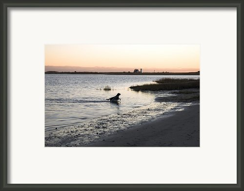 Black Labrador Running On Beach In Cape Framed Print By Keenpress