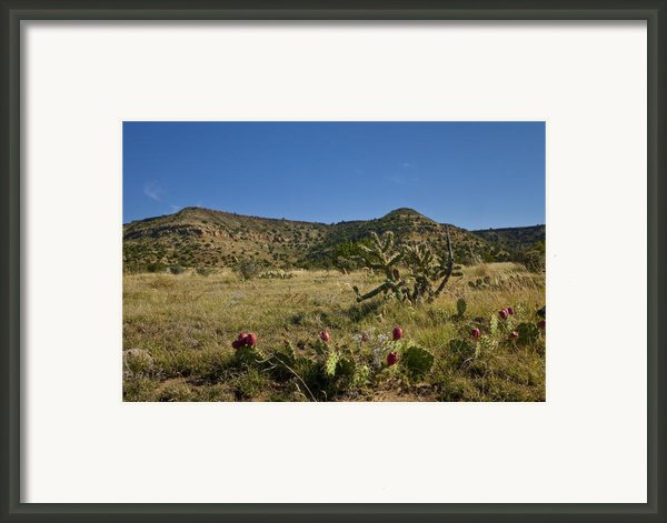 Black Mesa Cacti Framed Print By Charles Warren