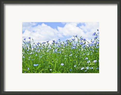 Blooming Flax Field Framed Print By Elena Elisseeva
