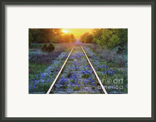 Blue Bonnets On Railroad Tracks Framed Print By Jeremy Woodhouse