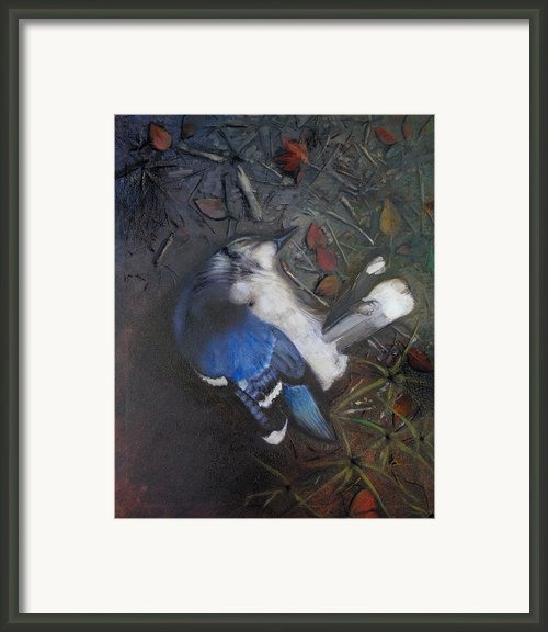 Blue Jay Framed Print By Cap Pannell