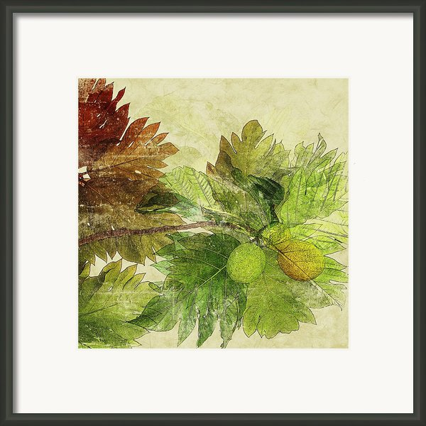 Breadfruit Framed Print By Kaypee Soh - Printscapes