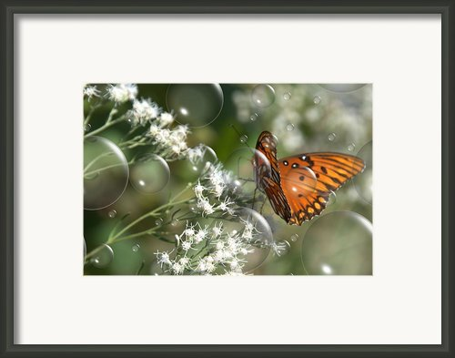 Bubble Fly Framed Print By Steven Richardson
