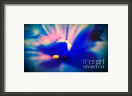 Butterfly On A Daisy 1 Framed Print By Melissa