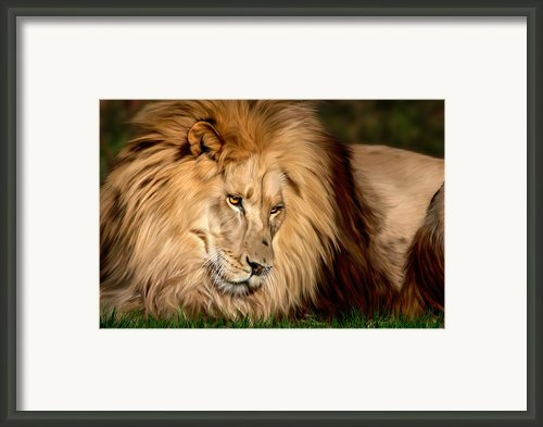 Cameron Framed Print By Big Cat Rescue