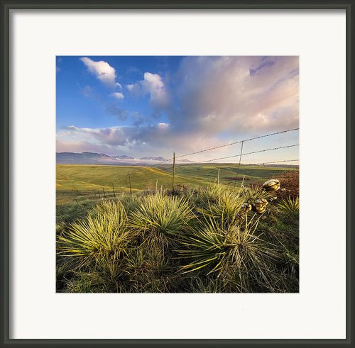 Catching The Sun Framed Print By Tyler Porter
