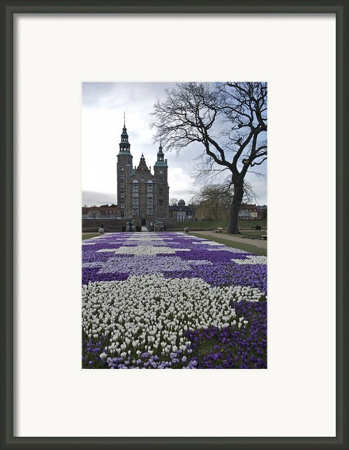 Denmark, Copenhagen Crocus Bloom Framed Print By Keenpress