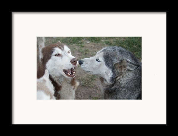 Dog Breath Framed Print By Lynda Dawson-youngclaus