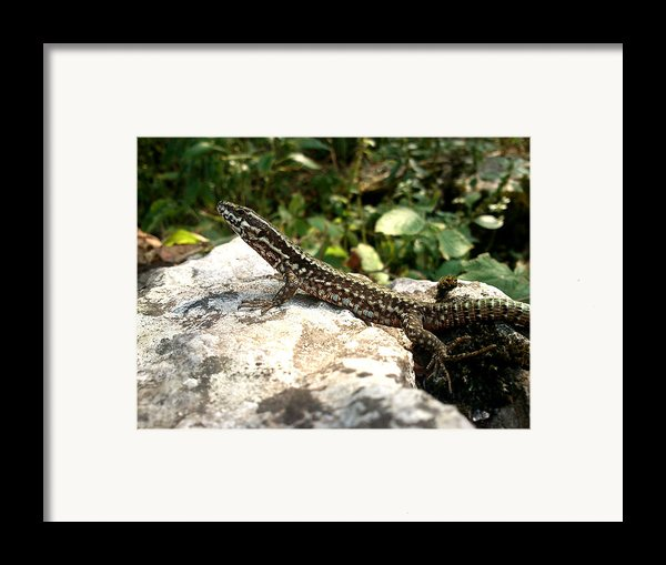 Dragon Framed Print By Lucy D