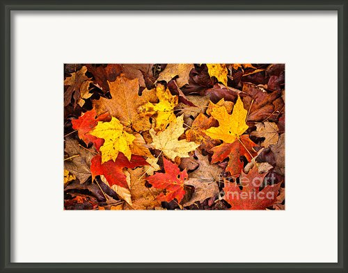 Fall Leaves Background Framed Print By Elena Elisseeva