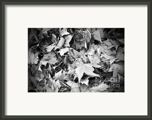 Fallen Leaves Framed Print By Fabrizio Troiani