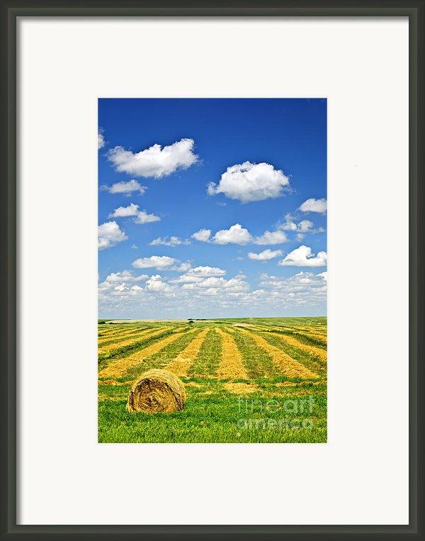 Farm Field At Harvest In Saskatchewan Framed Print By Elena Elisseeva