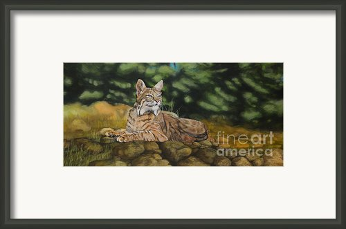 Felicity Framed Print By Jennifer Calicchio