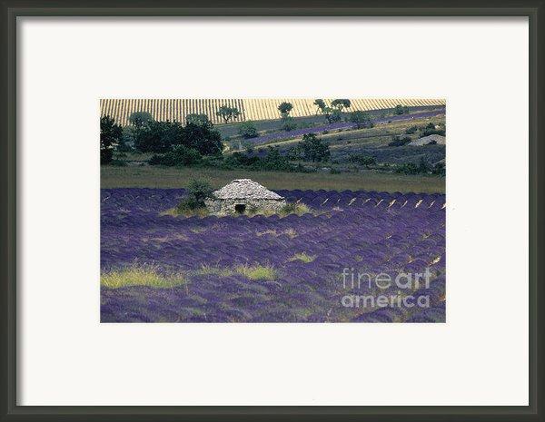 Field Of Lavender. Sault Framed Print By Bernard Jaubert