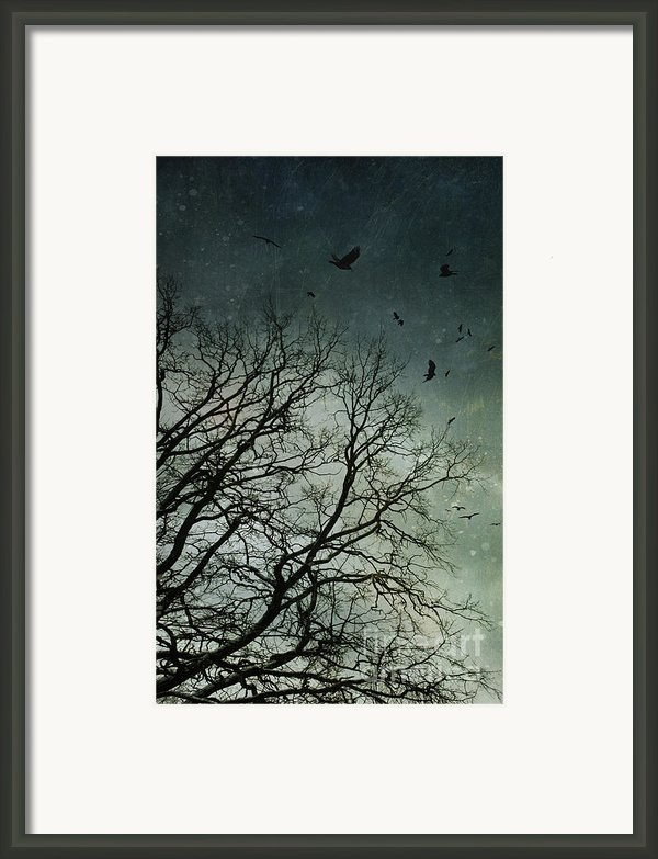Flock Of Birds Flying Over Bare Wintery Trees Framed Print By Sandra Cunningham