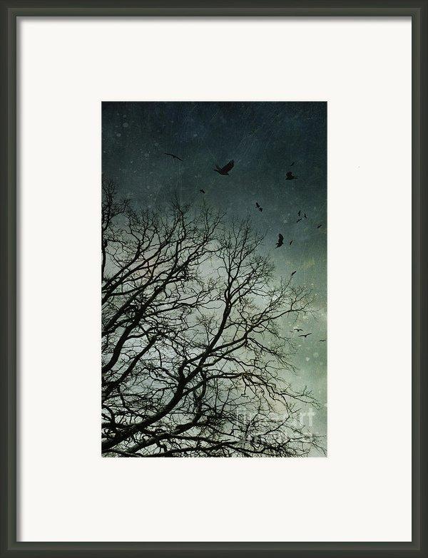 Flock Of Birds Flying Over Bare Wintery Trees Framed Print By Sandra Cunningham