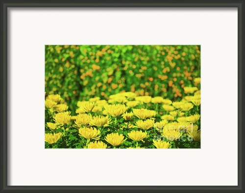 Flower Market Framed Print By Mothaibaphoto Prints