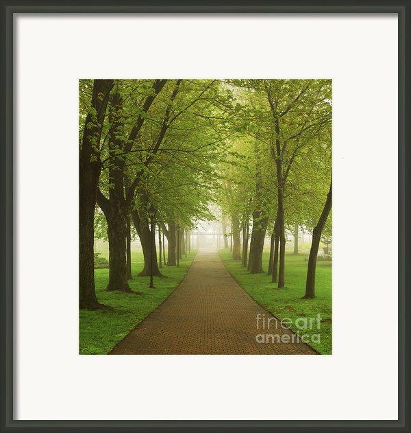 Foggy Park Framed Print By Elena Elisseeva
