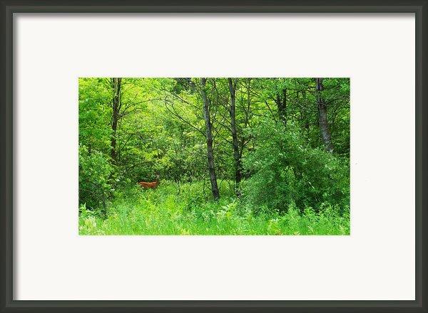 For Tori Framed Print By Anna Villarreal Garbis