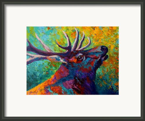 Forest Echo - Bull Elk Framed Print By Marion Rose