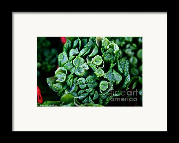 Fresh Chives Framed Print By Susan Herber