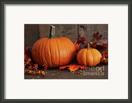 Harvested Pumpkins On Wood Table  Framed Print By Sandra Cunningham
