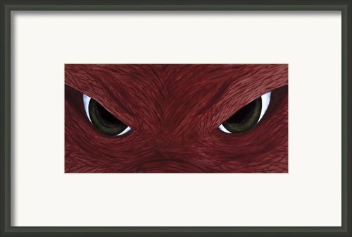 Hog Eyes Framed Print By Amy Parker