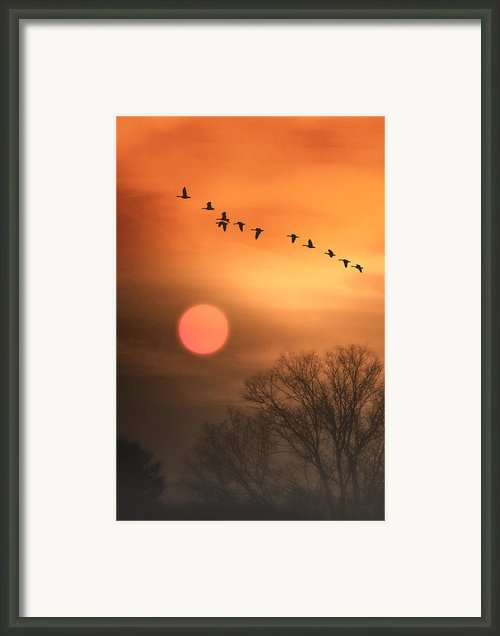 Hot Summer Flight Framed Print By Tom York