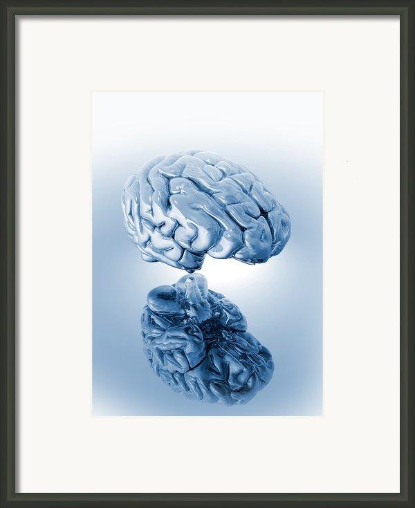 Human Brain, Artwork Framed Print By Victor Habbick Visions