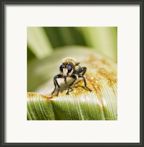 I See You Framed Print By Mitch Shindelbower