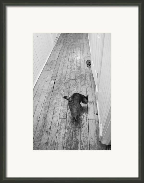 Kitty Framed Print By Nina Mirhabibi