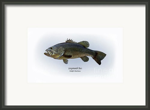 Largemouth Bass Framed Print By Ralph Martens