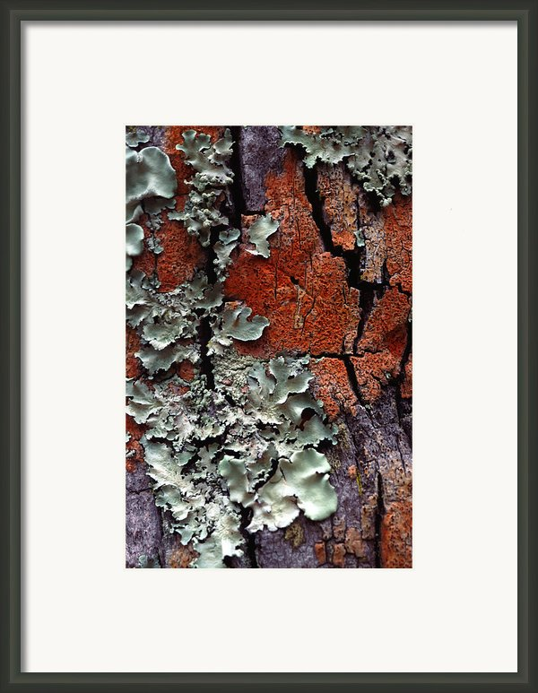 Lichen On Tree Bark Framed Print By John Foxx