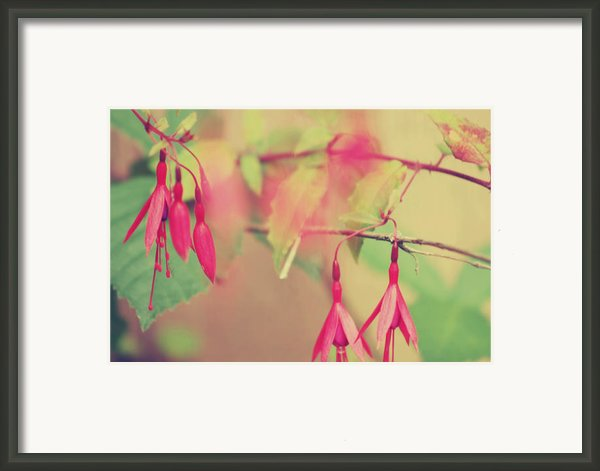 Lightly Pink Framed Print By Kerry Langel