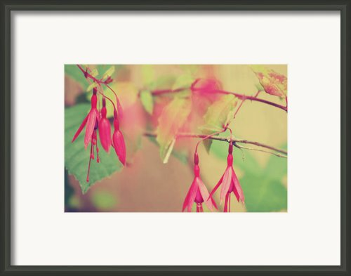 Lightly Pink Framed Print By Kerry Kralovic