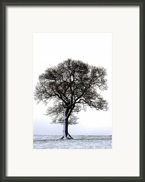 Lone Tree In Field Framed Print By John Short