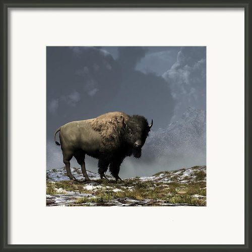 Lonely Bison Framed Print By Daniel Eskridge