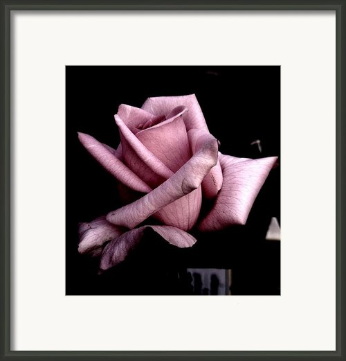 Mauve Flower Framed Print By Mohammed Nasir