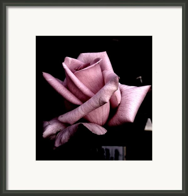 Mauve Flower Framed Print By Mohammed Nasir