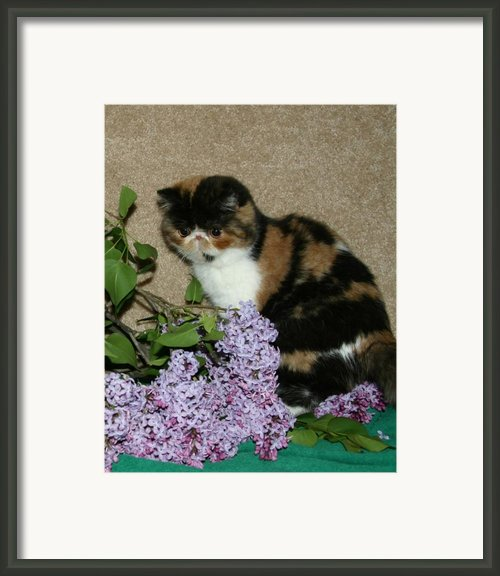 May 2005 Framed Print By Robert Morin
