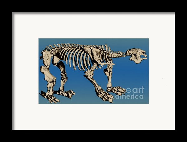 Megatherium Extinct Ground Sloth Framed Print By Science Source