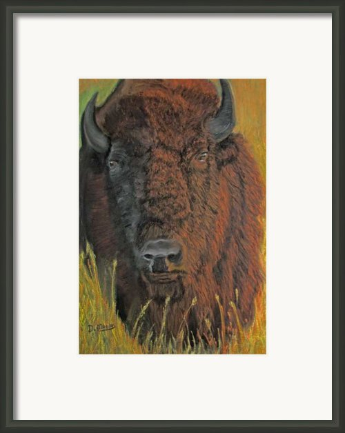 Monarch Of The Plains Framed Print By Dolly Bevan Manion