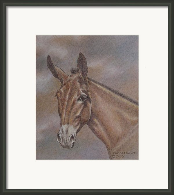 Mule Head Framed Print By Dorothy Coatsworth