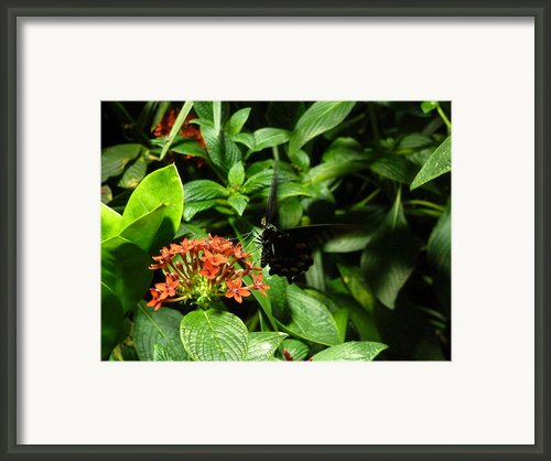 Nectar Framed Print By Felix Concepcion