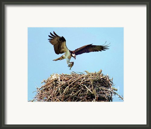 Open Wings Framed Print By Karen Wiles