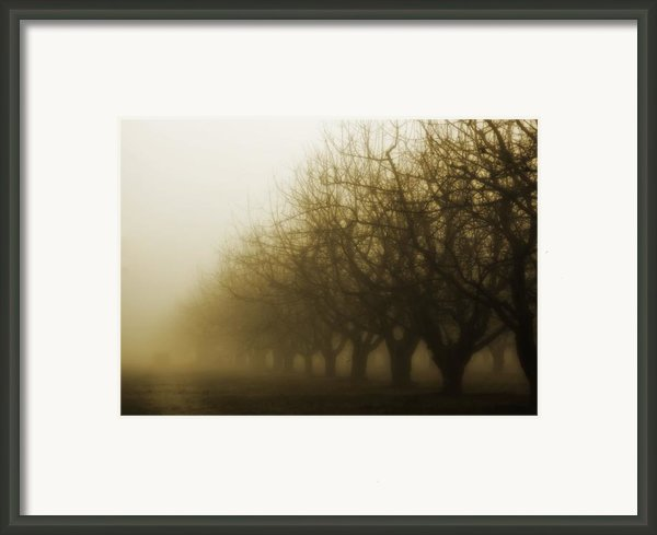Orchard In Fog Framed Print By Rebecca Cozart