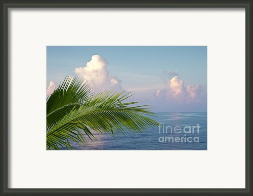 Palm And Ocean Framed Print By Blink Images