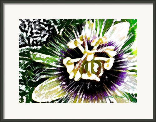 Passion Flower Framed Print By James Temple