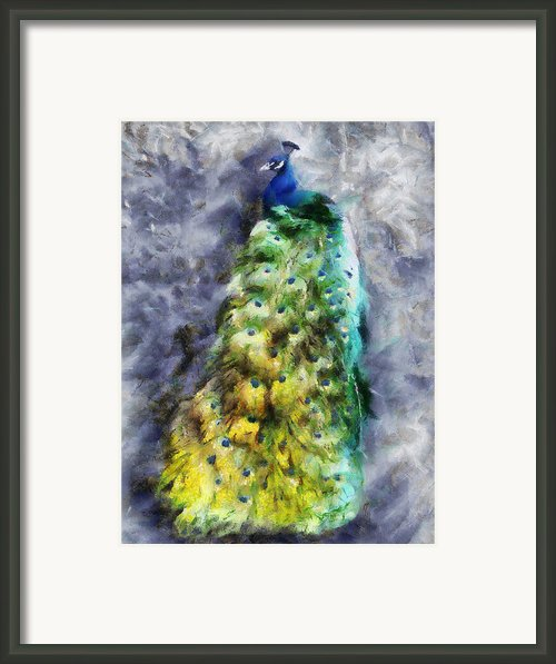 Peacock Portrait Framed Print By Jai Johnson